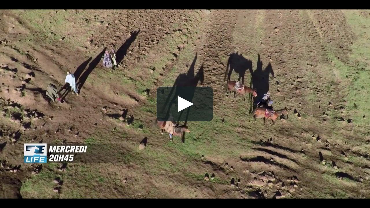 Dans les montagnes reculées du Lesotho, deux jeunes bergers se donnent une année pour concourir à la plus grande course hippique du pays.